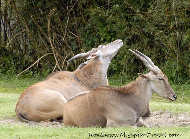 Elan Audubon Zoo New Orleans