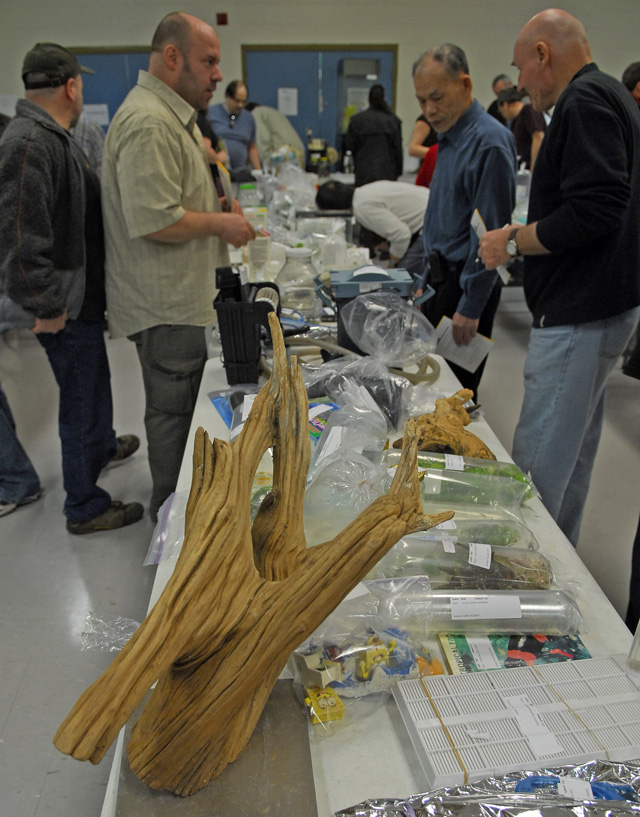 Ottawa Valley Aquarium Society - Annual GIANT Auction - 2010