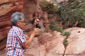 DSC_9174-Red-Rock-Canyon