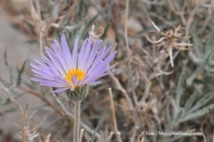 DSC_9214-Desert-foliage