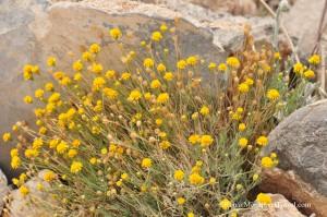 DSC_9230-desert-foliage