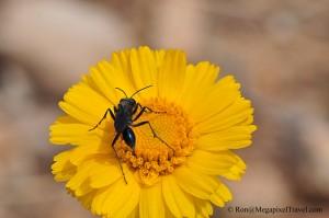 DSC_9233-Yellowe-flower-and