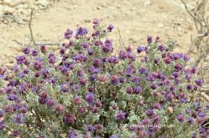 DSC_9234-Desert-foliage