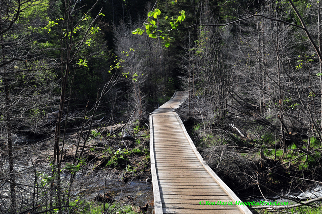 RON_3238-Marcy-Dam-trail