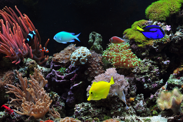 RON_3617-Saltwater-reef