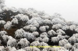 DSC_7504-frosted